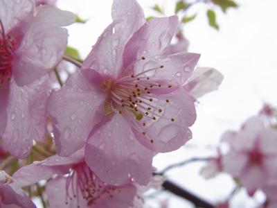 2012_04_03_26_2