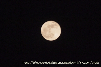 2012_05_06_5