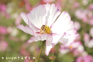 2012_10_10_274_2