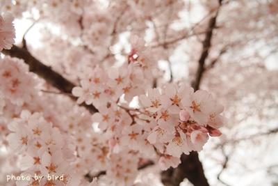 2013_03_25_39